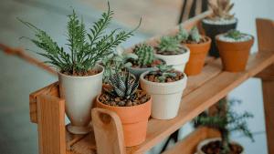 biljke-dom