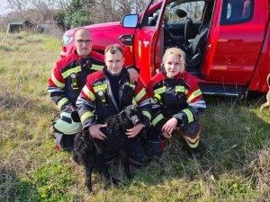 UMAG: Pas upao u šaht - vatrogasci ga spasili!