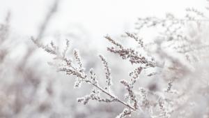 Slovenija na više mjesta zabilježila rekordno niske temperature