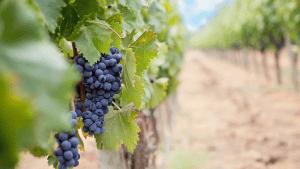 Doživljaj Istre s autohtonim mirisima i okusima koji usrećuju