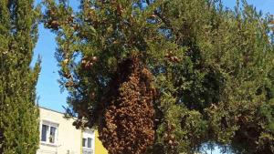 FOTO: Pogađate li već što je to na stablu?