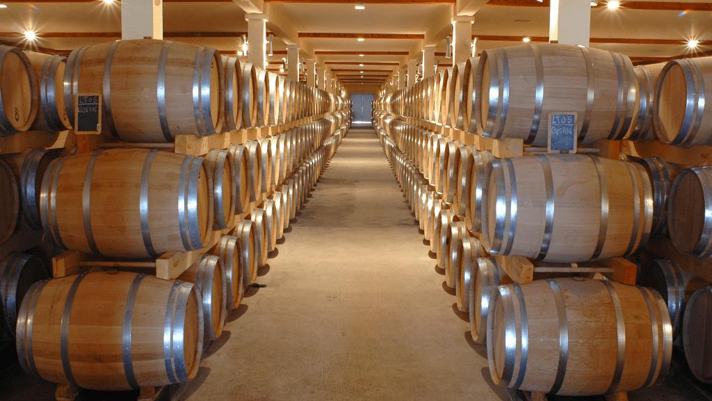 Vodič za istarske vinarije: Genijalan izbor za izlet
