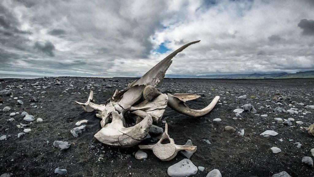 Znanstvenici otkrili fosil nove vrste kita s četiri noge
