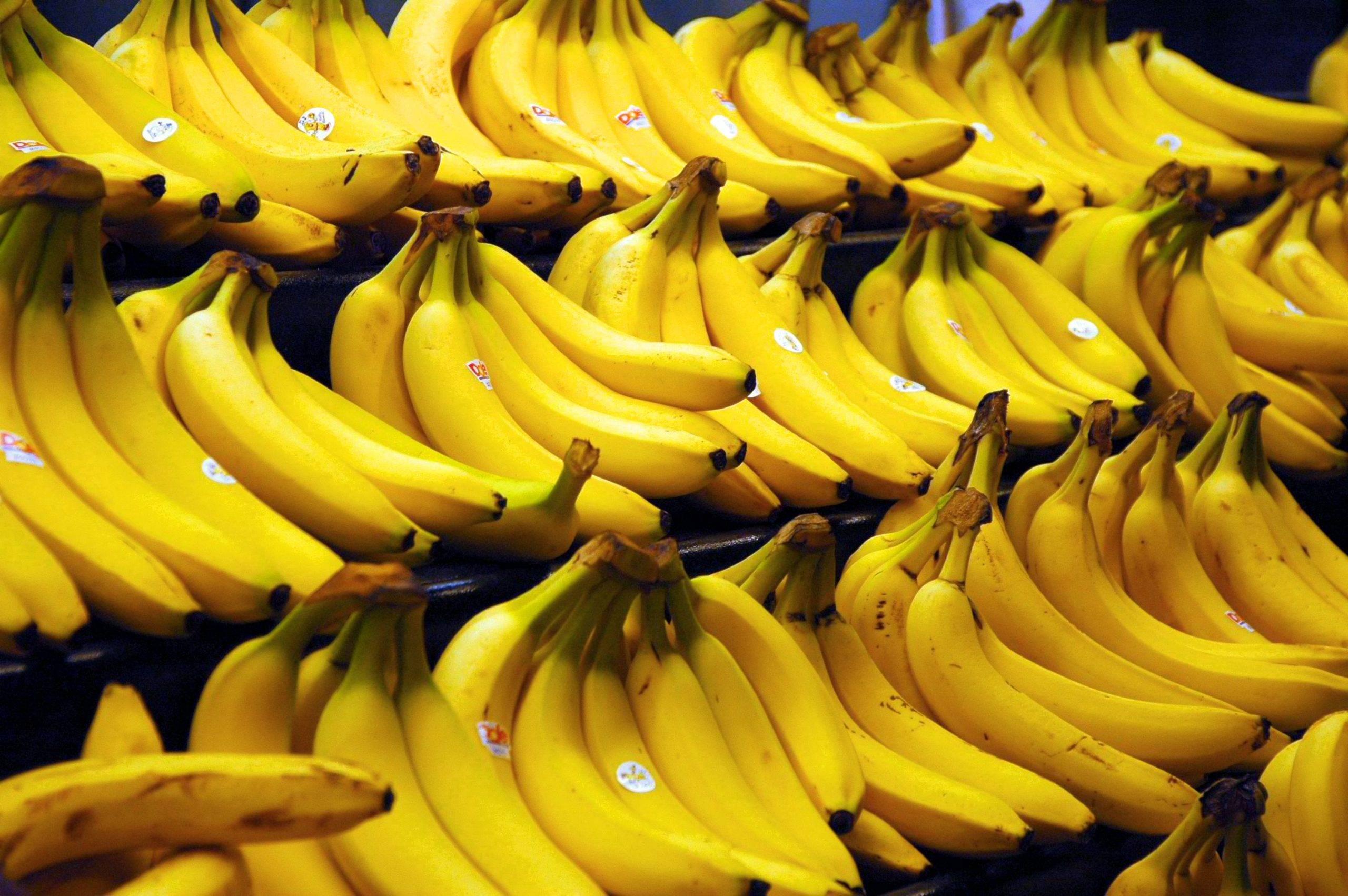 You are currently viewing Znate li zašto su banane uvijek broj 1 na vagi u dućanima?